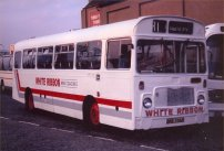 BNE766N with White Ribbon Coaches